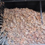Coconut Husks to cook Khao Lam | Learn Thai Culture