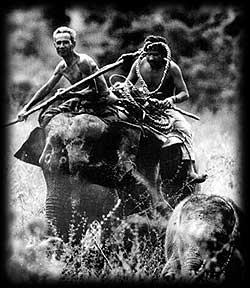 ชาวกูยกับการสาธิตการจับช้าง