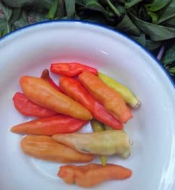 Thai Chilies for Yellow Curry
