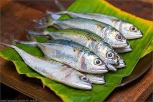 Mackerel Fish for Yellow Thai Curry | Thai Food