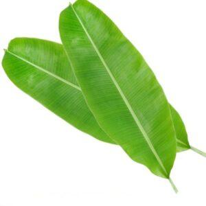 Banana Leaves for Loy Kratong Festival